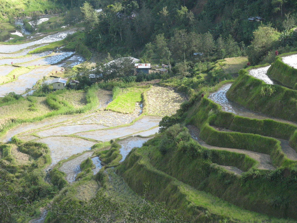 What to Do A Travel Guide to The Banaue Rice Terraces
