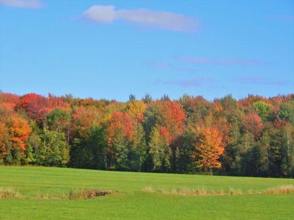 Canada Fall Colors