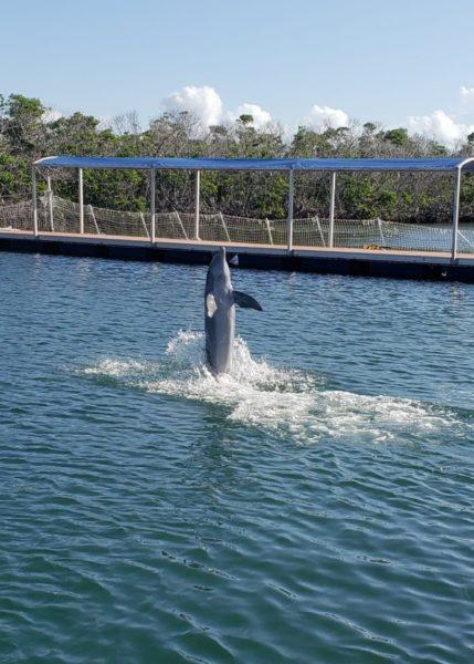 Dolphin Experience Cuba