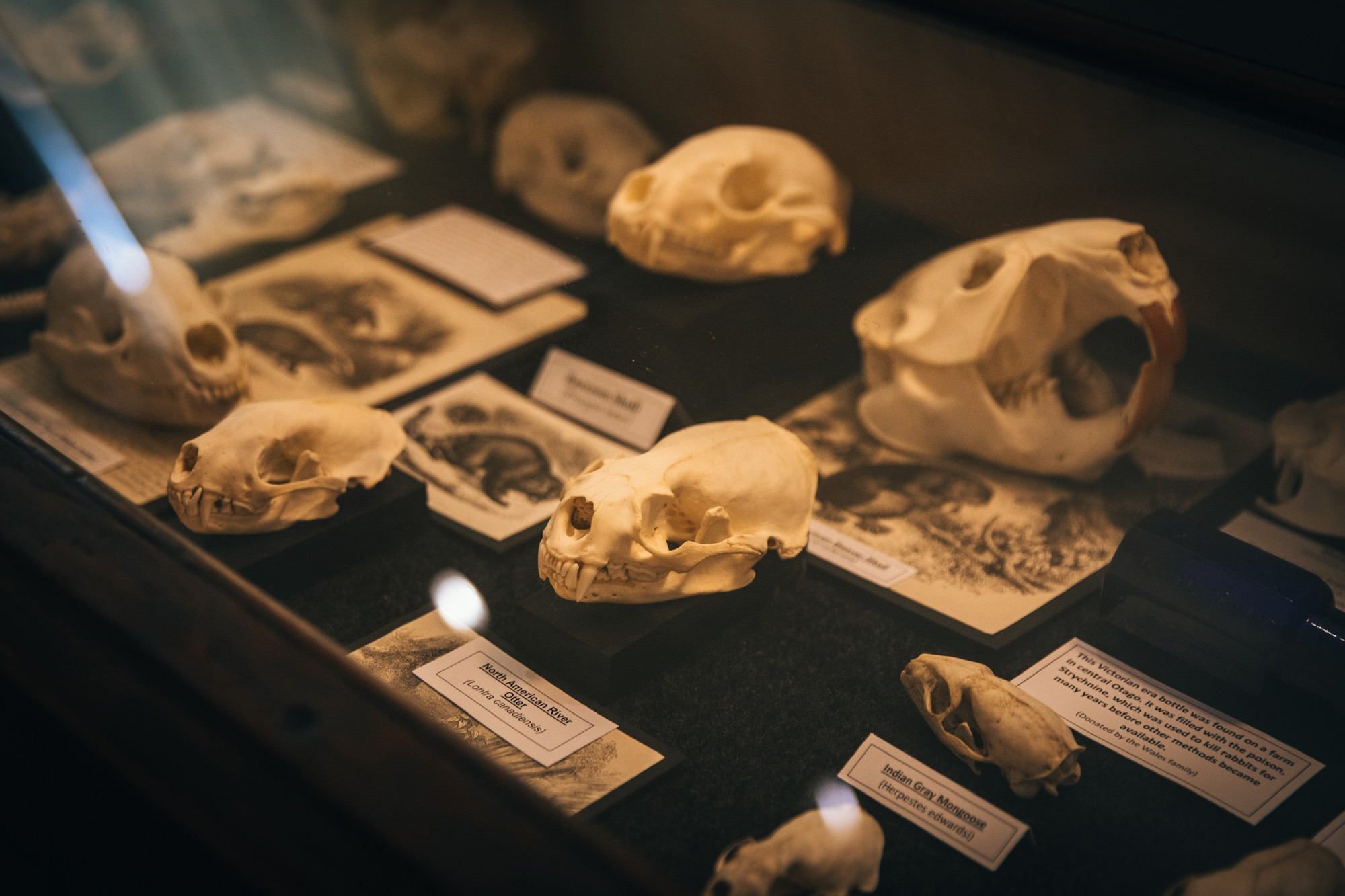 museum of natural mystery